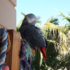 Parrot-Transportation-e1507966264621.png